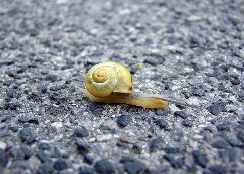 Snail, Floor, Paved, Crawling, Moving, Motion, Slow