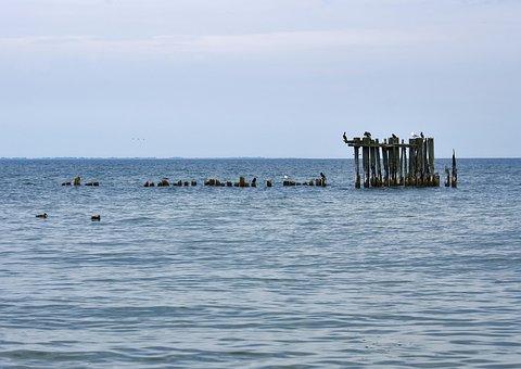 Sea, Birds, Blue, Gdynia, Western Pomerania, Poland