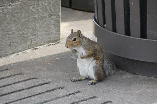 Squirrel, Cute, Brown, White, Animal, Young, Portrait