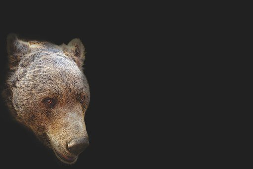 Bear, Bear Head, Artistic, Portrait, Head, Animal