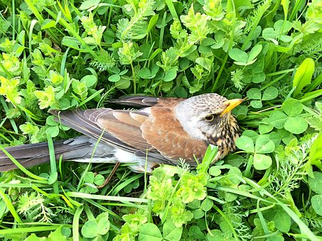 Nature, Bird, Birds, Thrush, Grass, Feathers, Beak