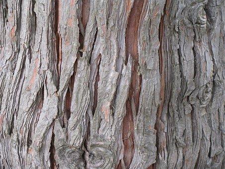Cedar, Tree, Bark, Trunk, Chamaecyparis, Lawsoniana