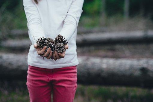 Blur, Blurry, Close-up, Conifer Cones, Female, Girl