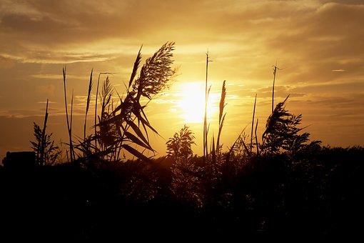 Sun, Color, Contrast, Landscape, Nature, Sunset, Light