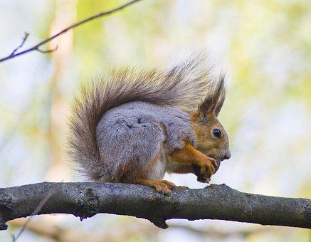 Squirrel, Protein, Animals, Animal, Nature, Feeding