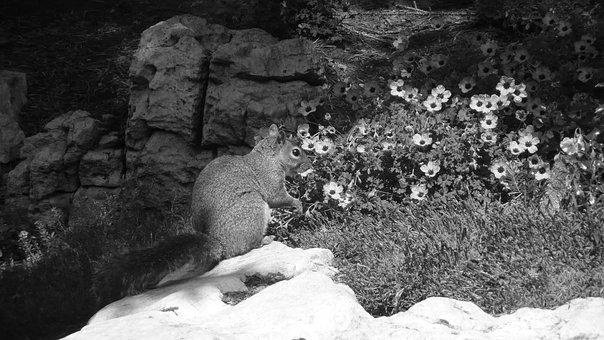 Squirrel, Park, Stone, Rock, Flower, Season, Black