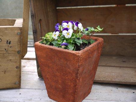 Terracotta Pot, Viola, Garden, Flower, Terracotta
