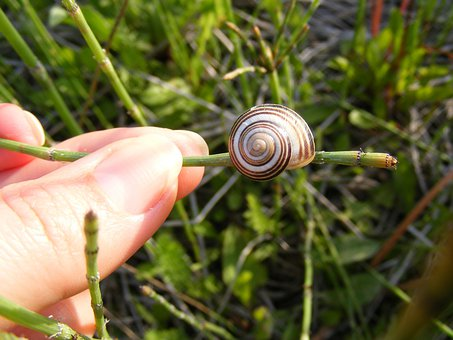 Climbing, Close-up, Coiled, Gastropoda, Grass, Green