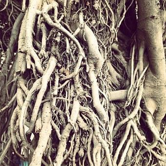 Roots, Root, Tree, Spain, Hassle, Brain, Forest