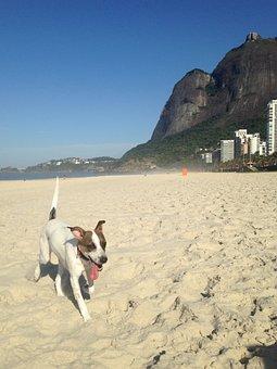 Dog, Beach, Pedra Da Gavea, Domestic Animals, Sand, Mar