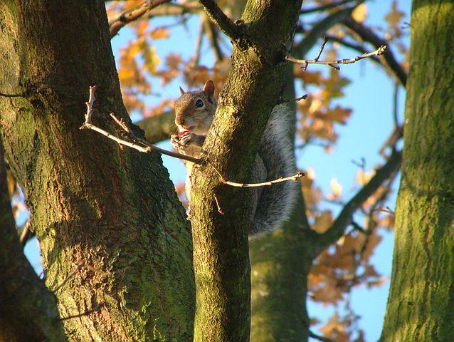 Squirrel, Crunch, Forest, Nature, Animal, Mammal