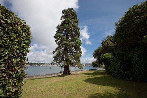 Cedar, Park, Garden, Trees, Sea, Lake, Nature, Plant
