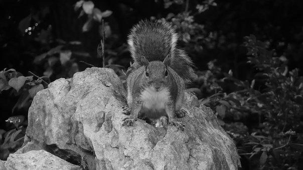 Squirrel, Park, Stone, Rock, Season, Black, White