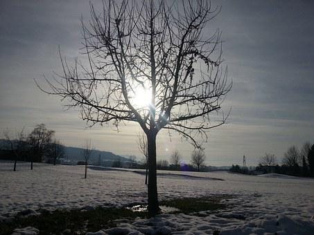 Tree, Winter Picture, Nature, Sun, Snow, Winter, Vening