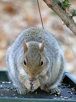 Squirrel, Wildlife, Hungry, Eating, Wild Animals