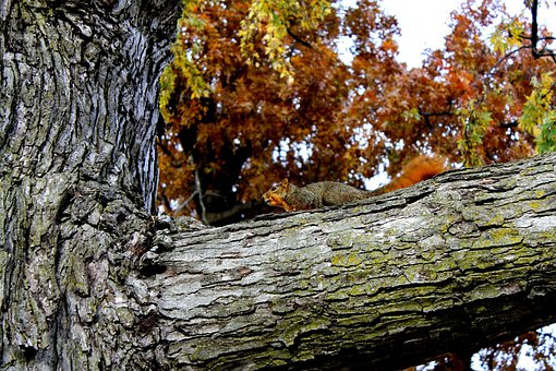 Squirrel, Animal, Rodent, Wild, Wildlife, Mammal, Fur