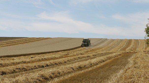 Field, Landscape, Sky, Agriculture, Harvest, Grass