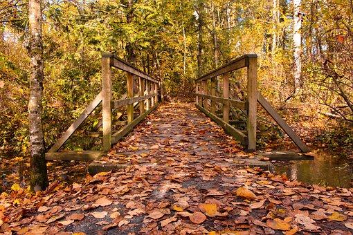 Bridge, Autumn, Leaves, Landscape, Nature, Architecture