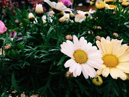 Film-color, Flower, Small Fresh, Garden, Meadows