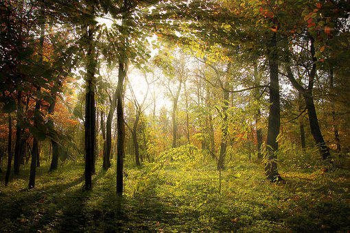 Rays, Forest, Autumn, Landscape, Nature, Sun, Wood