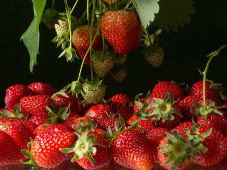 Strawberries, Bush, Fruits On The Tree, Fruit, Fruits