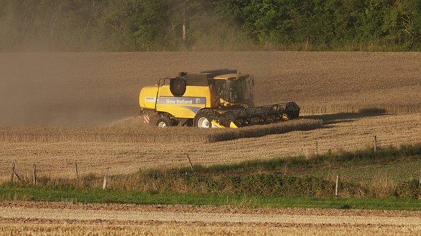 Agriculture, Field, Landscape, Harvest, Grass, Rural