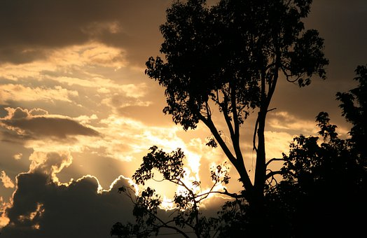 Sky, Clouds, Dark, Edging, Gold, Bright, Light, Tree