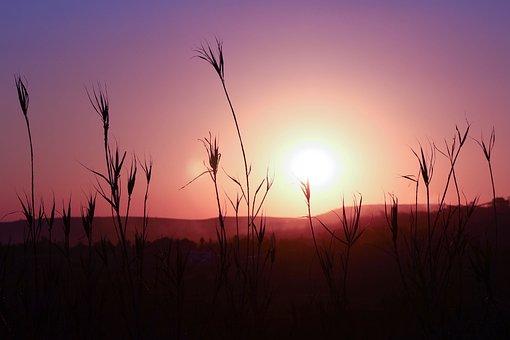 Sunset, Silhouette, Landscape, Plant, Sun, Sky, Pink
