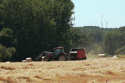 Tractor, Work In The Fields, Hay, Forage