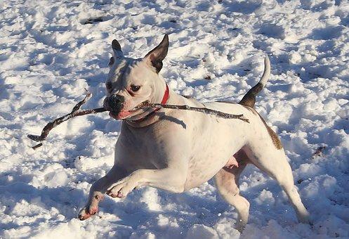 Dog, Winter, Snow, Ice, Playful, Fetch, Fetching, Cute