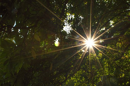 Backlighting, Sun, Without Effects, Leaves, Crown
