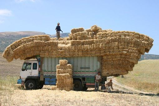 Morocco, Truck, Hay, Work, Agriculture