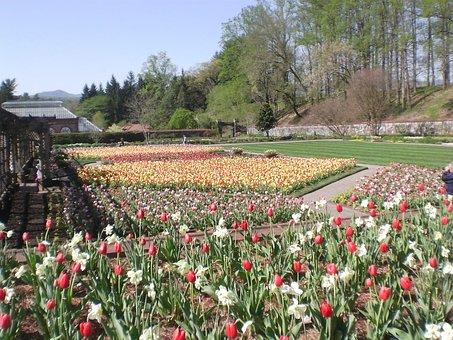 Biltmore, Gardens, Tulips, Spring, Floral, Plants
