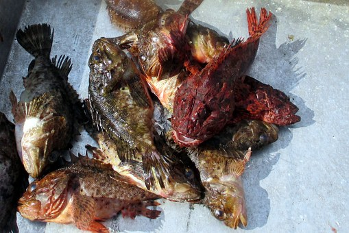 Fish Market, Fish, Frisch, Ice, Market, Lesbos, Sea