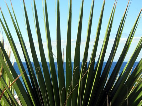 Palm, James, Prickly, Pointed, Green, Nature, Sea, Sky