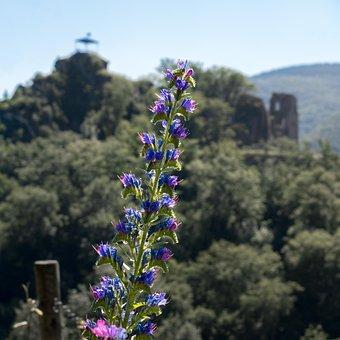 Natter Head, Pointed Flower, Flower, Blossom, Bloom