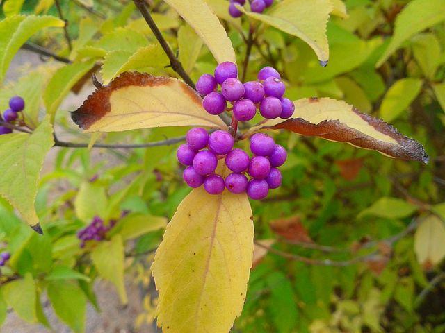 Plant, Flower, Nature, Violet, Fruit, Tree, Garden