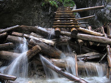 Timber, Wood, Forest, Trees, Woods, Water, River