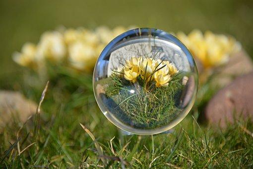Ball, Spring, Crocus, Yellow, Close