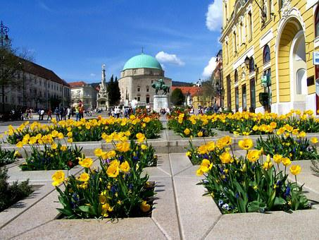 Yellow Tulip Bed, Pecs, Széchenyi Square