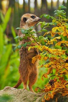 Zoo, Animal, Garden, View, Nature, Brown, Head, Mammal