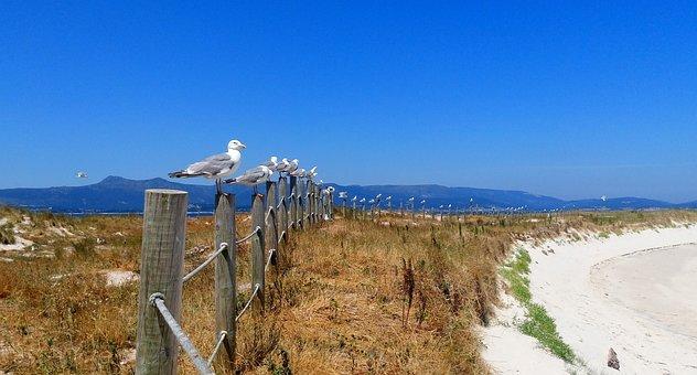 Seagulls, Beach, Fine Sand, Arousa, Areoso, Islet
