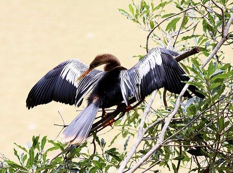 Penguin, Bird, On The Branch, Sunbathing, Fish Eater
