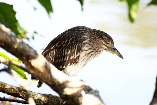 Bird, Kingfisher, Fish Eater, Bird That Eats Fish