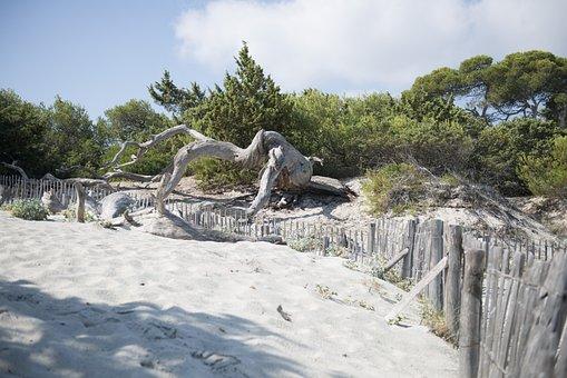 Saleccia, Beach, Corsican, Nature, Travel, Sand