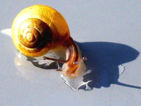 Snail, Shell, Probe, Mollusk, Nature, Creature