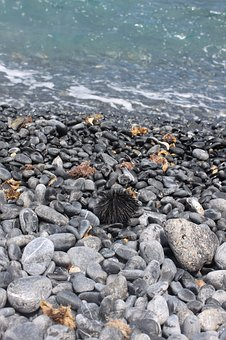 Sea Urchin, Beach, Sea, Pebble, Water, Greece, Summer