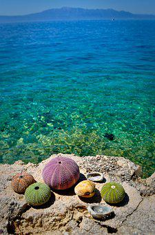 Sea ​​urchin, Beach, Sea, Water, Summer, Croatia