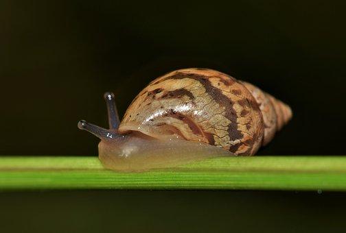 Shell, Snail, Mollusk, Land Snail, Spiral, Cone