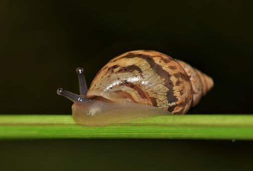 Shell, Snail, Mollusk, Land Snail, Spiral, Cone